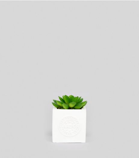 White Mini Cube Artificial Succulent Plant | New Look