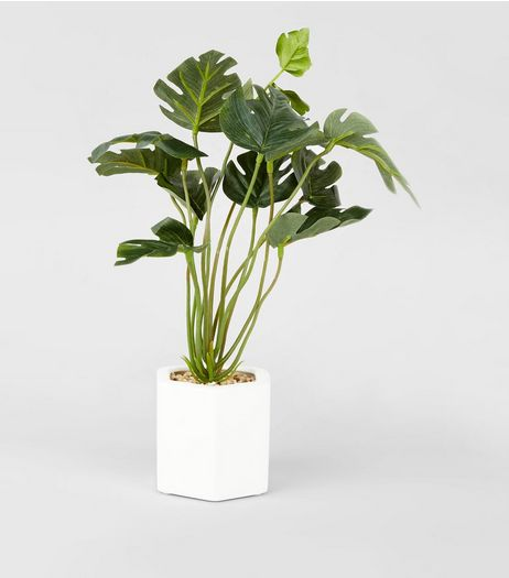 Artificial Mini Cheese Plant | New Look